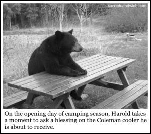 bear steward